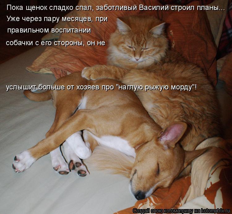 Котоматрица: Пока щенок сладко спал, заботливый Василий строил планы... Уже через пару месяцев, при правильном воспитании собачки с его стороны, он не усл