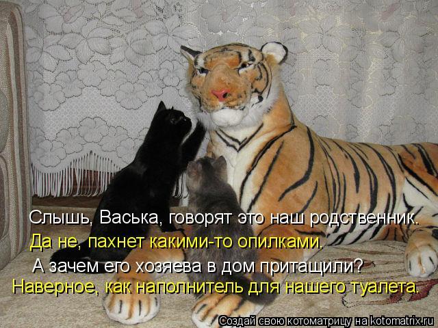Котоматрица: Слышь, Васька, говорят это наш родственник. Да не, пахнет какими-то опилками. А зачем его хозяева в дом притащили? Наверное, как наполнитель д