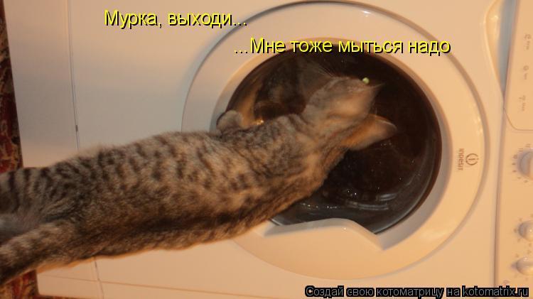 Котоматрица: Мурка, выходи... ...Мне тоже мыться надо