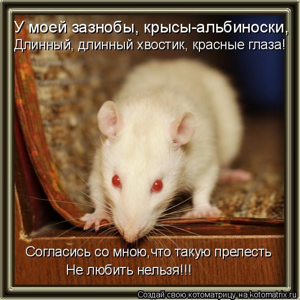 Котоматрица: У моей зазнобы, крысы-альбиноски,   Согласись со мною,что такую прелесть  Длинный, длинный хвостик, красные глаза!  Не любить нельзя!!!