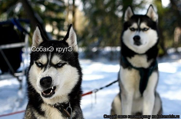 Котоматрица: СобакЭ крутЭ