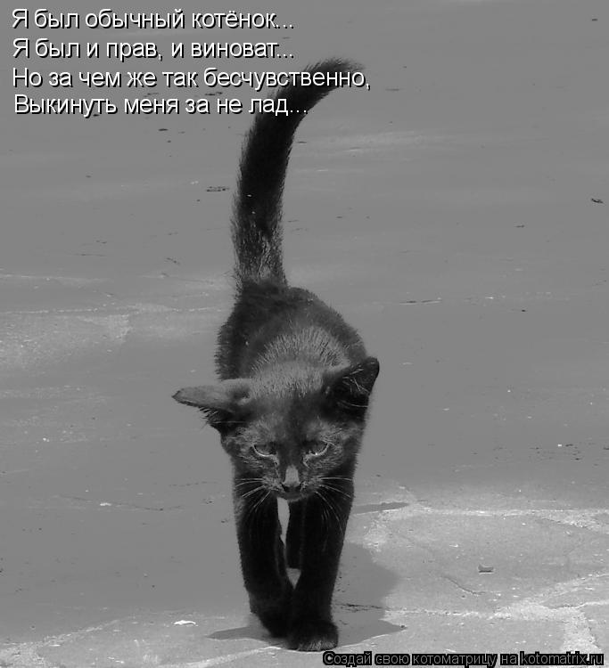 Котоматрица: Я был обычный котёнок... Я был и прав, и виноват... Но за чем же так бесчувственно, Выкинуть меня за не лад...