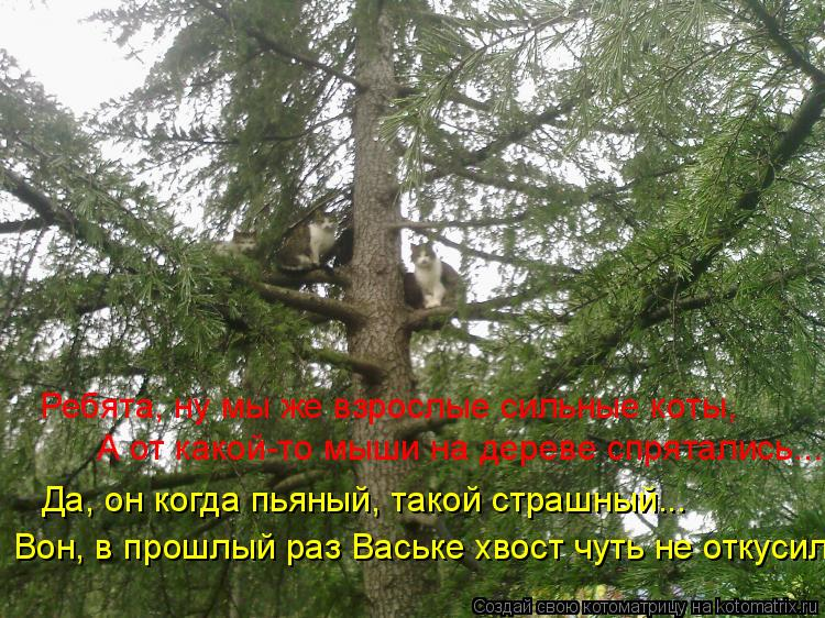 Котоматрица: Ребята, ну мы же взрослые сильные коты, А от какой-то мыши на дереве спрятались... Да, он когда пьяный, такой страшный... Вон, в прошлый раз Вась