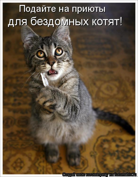 Котоматрица: Подайте на приюты для бездомных котят!