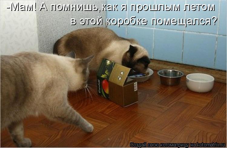 Котоматрица: -Мам! А помнишь,как я прошлым летом  в этой коробке помещался?