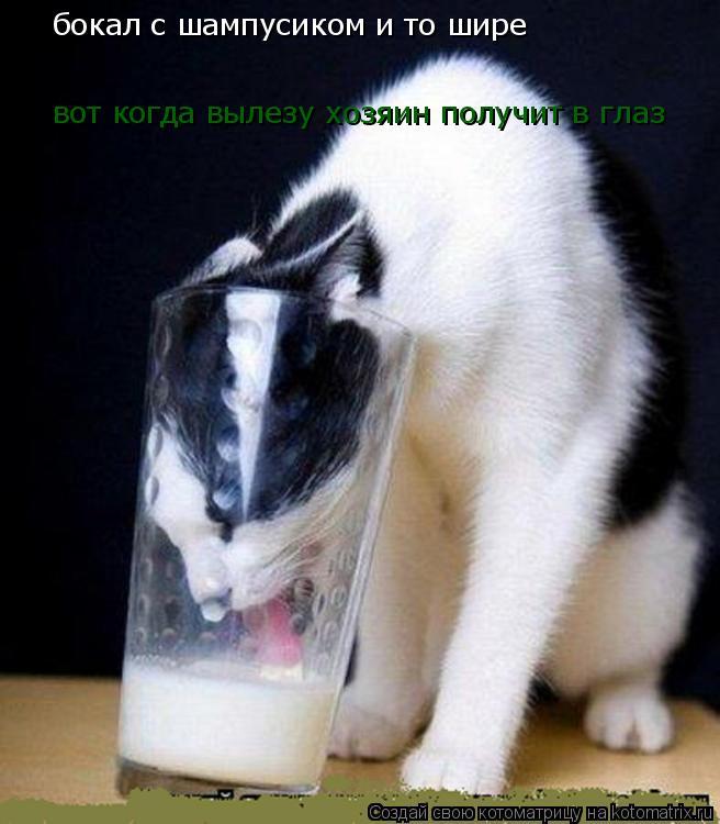 Котоматрица: бокал с шампусиком и то шире вот когда вылезу хозяин получит в глаз
