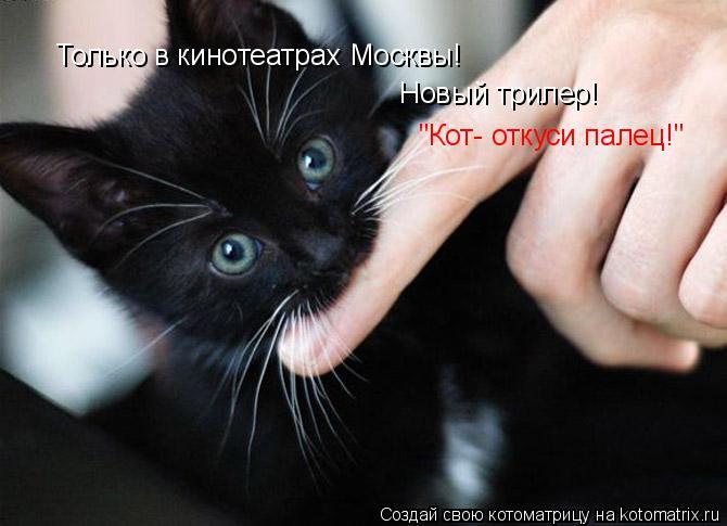 """Котоматрица: Только в кинотеатрах Москвы! Новый трилер! """"Кот- откуси палец!"""""""