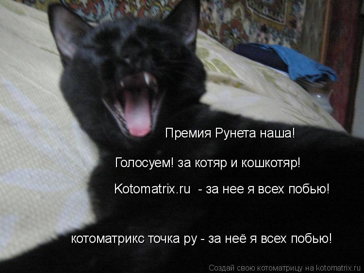 Котоматрица: Премия Рунета наша! Голосуем! за котяр и кошкотяр! Kotomatrix.ru  - за нее я всех побью! котоматрикс точка ру - за неё я всех побью!