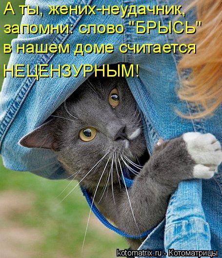 """Котоматрица: А ты, жених-неудачник, запомни: слово """"БРЫСЬ"""" в нашем доме считается НЕЦЕНЗУРНЫМ!"""