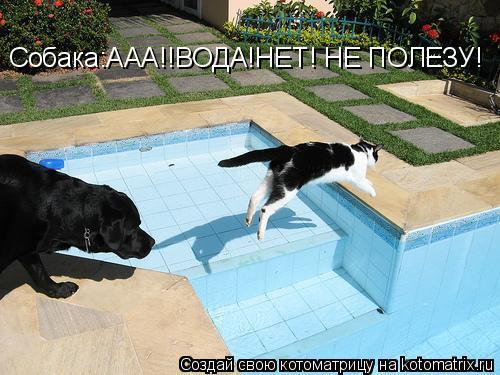 Котоматрица: Собака:ААА!!ВОДА!НЕТ! НЕ ПОЛЕЗУ!