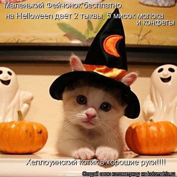 Котоматрица: Маленький Фейчонок бесплатно. на Helloween даёт 2 тыквы, 5 мисок молока и конфеты Хеллоуинский котик в хорошие руки!!!!