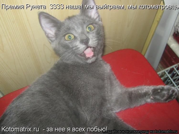 Котоматрица: Премия Рунета №3333 наша! мы выйграем, мы котоматровцы! Kotomatrix.ru  - за нее я всех побью!