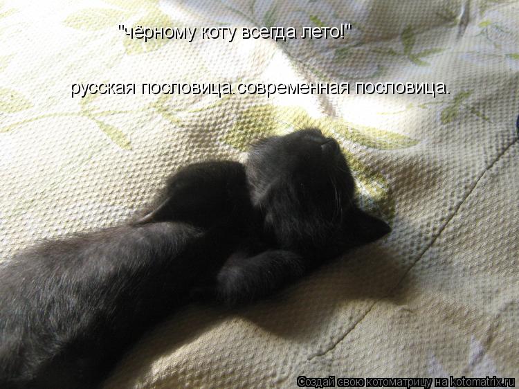 """Котоматрица: """"чёрному коту всегда лето!"""" русская пословица.современная пословица."""