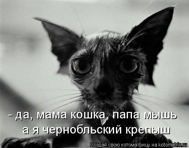 Котоматрица: - да, мама кошка, папа мышь а я чернобльский крепыш