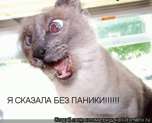 Котоматрица: Я СКАЗАЛА БЕЗ ПАНИКИ!!!!!!