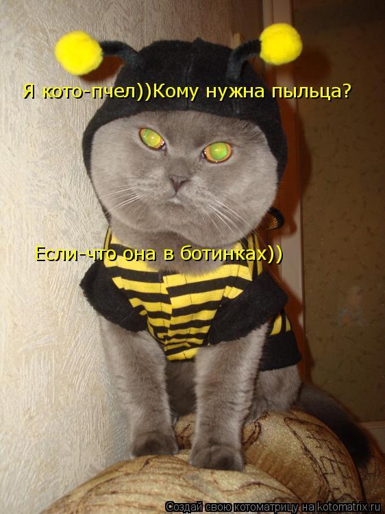 Котоматрица: Я кото-пчел))Кому нужна пыльца? Если-что она в ботинках))