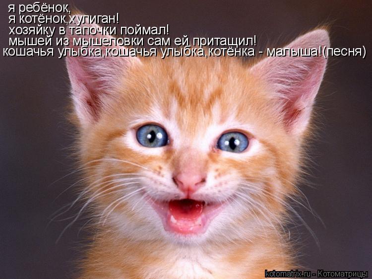 Котоматрица: я ребёнок,  я котёнок,хулиган! хозяйку в тапочки поймал! мышей из мышеловки сам ей притащил! кошачья улыбка,кошачья улыбка,котёнка - малыша!(п