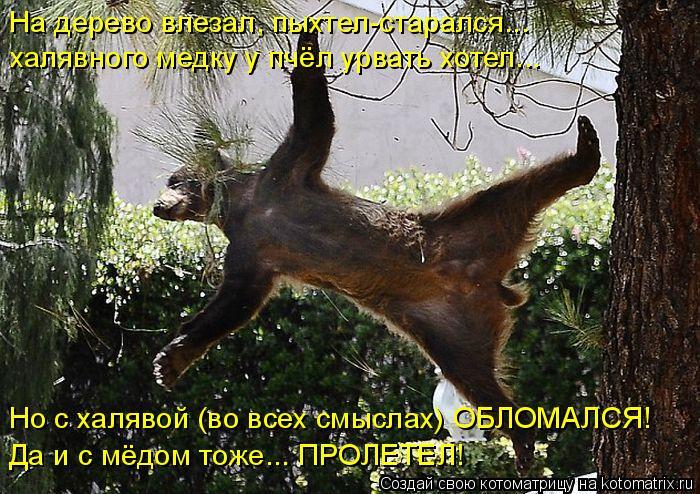 Котоматрица: На дерево влезал, пыхтел-старался... халявного медку у пчёл урвать хотел... Но с халявой (во всех смыслах) ОБЛОМАЛСЯ! Да и с мёдом тоже... ПРОЛЕТ