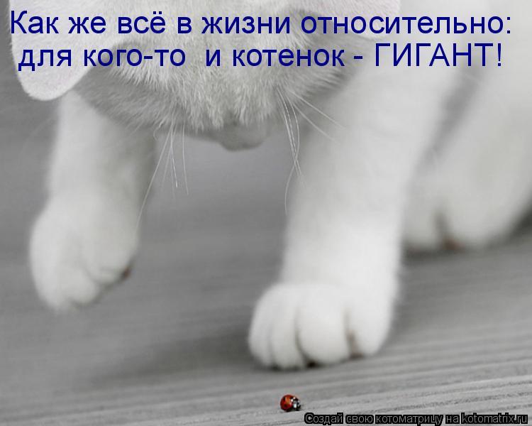 Котоматрица: Как же всё в жизни относительно: для кого-то  и котенок - ГИГАНТ!
