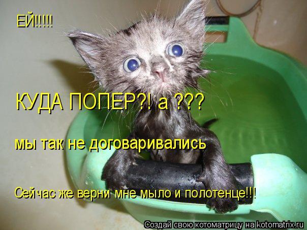 Котоматрица: ЕЙ!!!!! КУДА ПОПЕР?! а ??? мы так не договаривались Сейчас же верни мне мыло и полотенце!!!