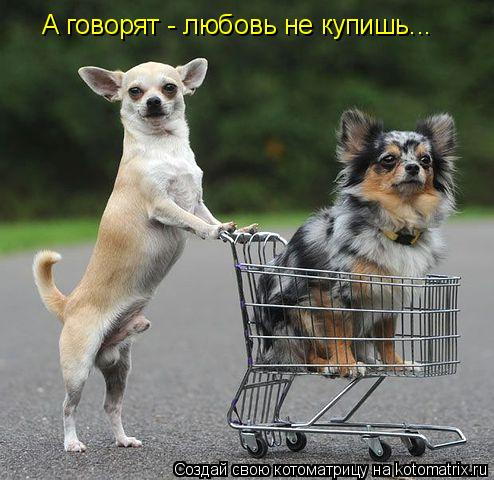 Котоматрица: А говорят - любовь не купишь...