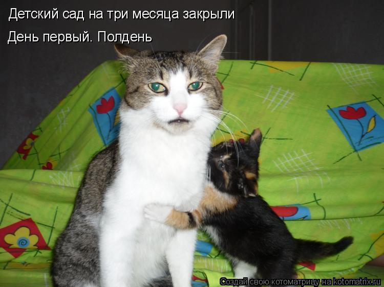 Котоматрица: Детский сад на три месяца закрыли День первый. Полдень