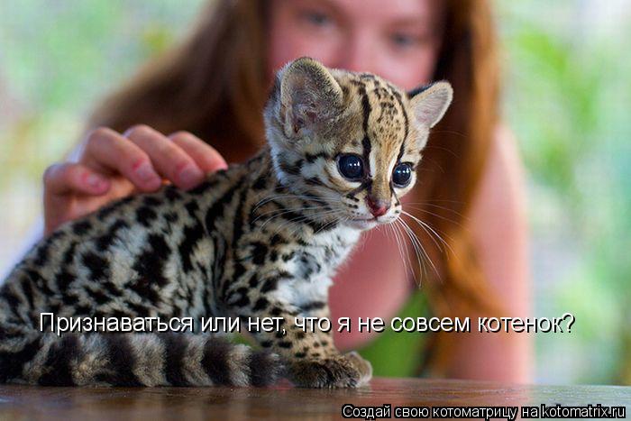 Котоматрица: Признаваться или нет, что я не совсем котенок?