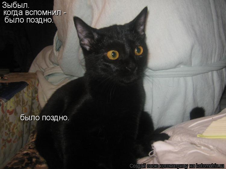 Котоматрица: Зыбыл. когда вспомнил -  было поздно. было поздно.