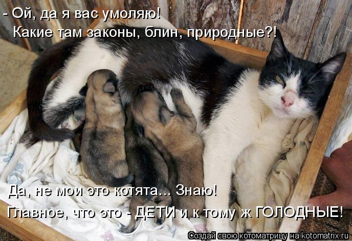 Котоматрица: - Ой, да я вас умоляю! Какие там законы, блин, природные?! Да, не мои это котята... Знаю! Главное, что это - ДЕТИ и к тому ж ГОЛОДНЫЕ!
