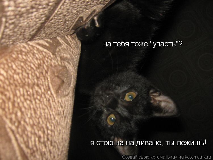 """Котоматрица: я стою на на диване, ты лежишь! на тебя тоже """"упасть""""?"""