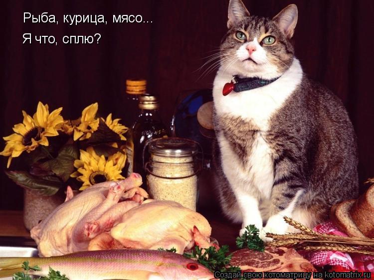 Котоматрица: Рыба, курица, мясо...  Я что, сплю?