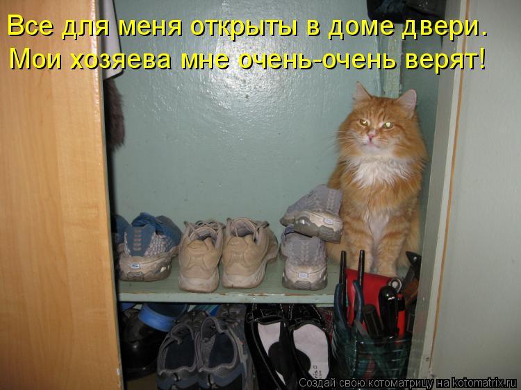 Котоматрица - Все для меня открыты в доме двери. Мои хозяева мне очень-очень верят!