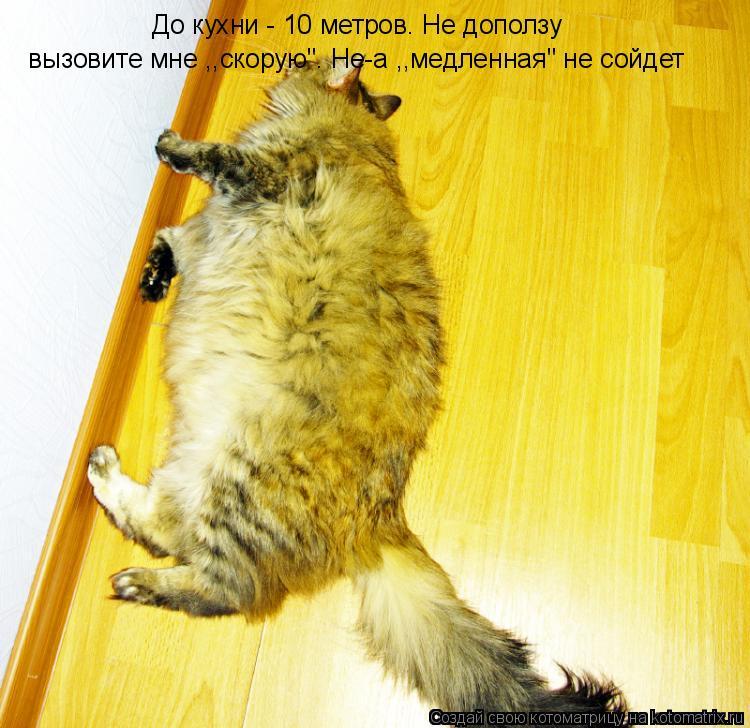 """Котоматрица: До кухни - 10 метров. Не доползу вызовите мне ,,скорую"""". Не-а ,,медленная"""" не сойдет"""