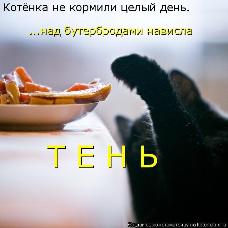 Котоматрица: Котёнка не кормили целый день. ...над бутербродами нависла Т Е Н Ь