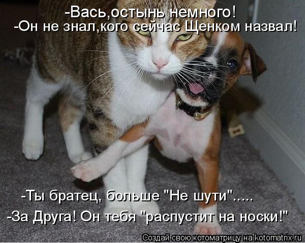 """Котоматрица: -Вась,остынь немного! -Он не знал,кого сейчас Щенком назвал! -Ты братец, больше """"Не шути""""..... -За Друга! Он тебя """"распустит на носки!"""""""