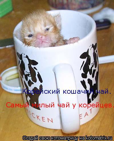 Котоматрица: Корейский кошачий чай. Корейский кошачий чай. Самый милый чай у корейцев.