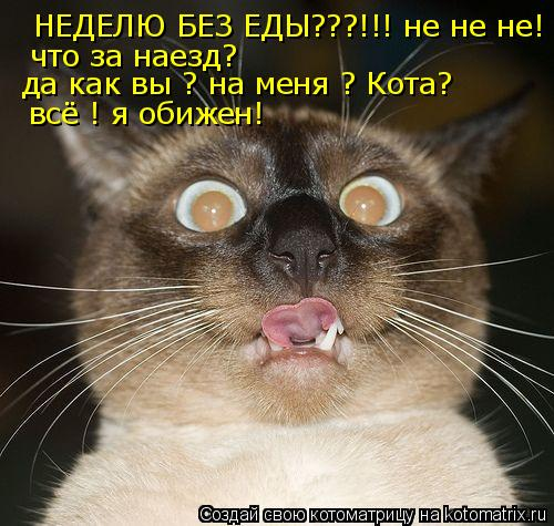 Котоматрица: НЕДЕЛЮ БЕЗ ЕДЫ???!!! не не не!  что за наезд? да как вы ? на меня ? Кота? всё ! я обижен!