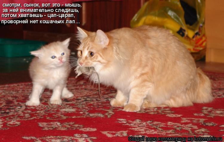 Котоматрица: смотри, сынок, вот это - мышь, за ней внимательно следишь, потом хватаешь - цап-царап, проворней нет кошачьих лап...