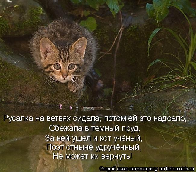 Котоматрица: Русалка на ветвях сидела, потом ей это надоело,  Сбежала в темный пруд. За ней ушел и кот учёный,  Поэт отныне удручённый, Не может их вернуть!