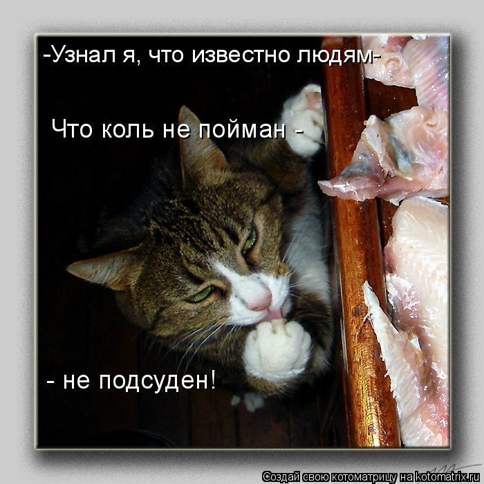 Котоматрица - -Узнал я, что известно людям- Что коль не пойман - - не подсуден!