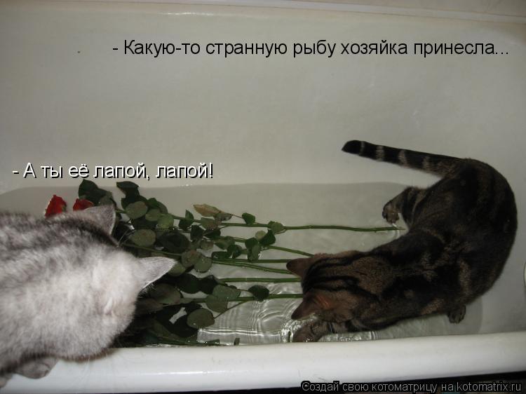 Котоматрица: - Какую-то странную рыбу хозяйка принесла... - А ты её лапой, лапой!