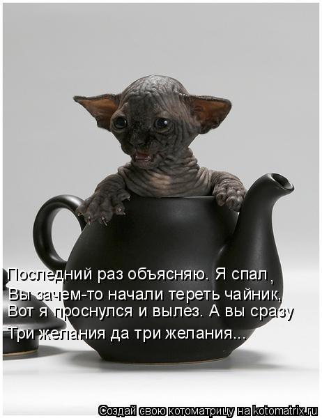 Котоматрица: Вот я проснулся и вылез. А вы сразу Последний раз объясняю. Я спал Вы зачем-то начали тереть чайник, Три желания да три желания... ,
