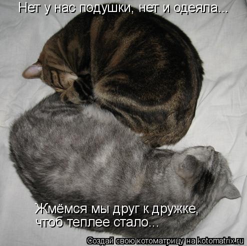 Котоматрица: Нет у нас подушки, нет и одеяла... Жмёмся мы друг к дружке, чтоб теплее стало...