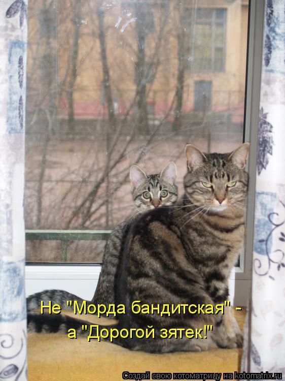 """Котоматрица - Не """"Морда бандитская"""" -  а """"Дорогой зятек!"""""""