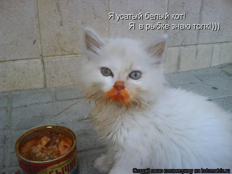 Котоматрица: Я усатый белый кот! Я  в рыбке знаю толк!)))