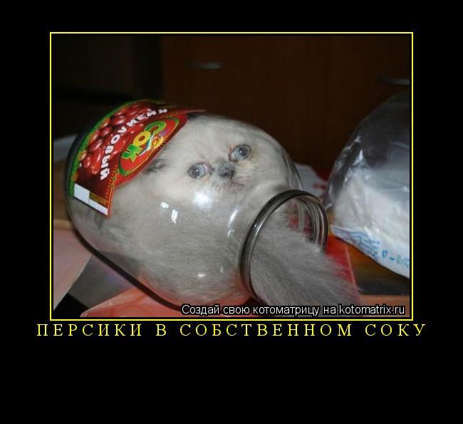 Котоматрица: персики в собственном соку