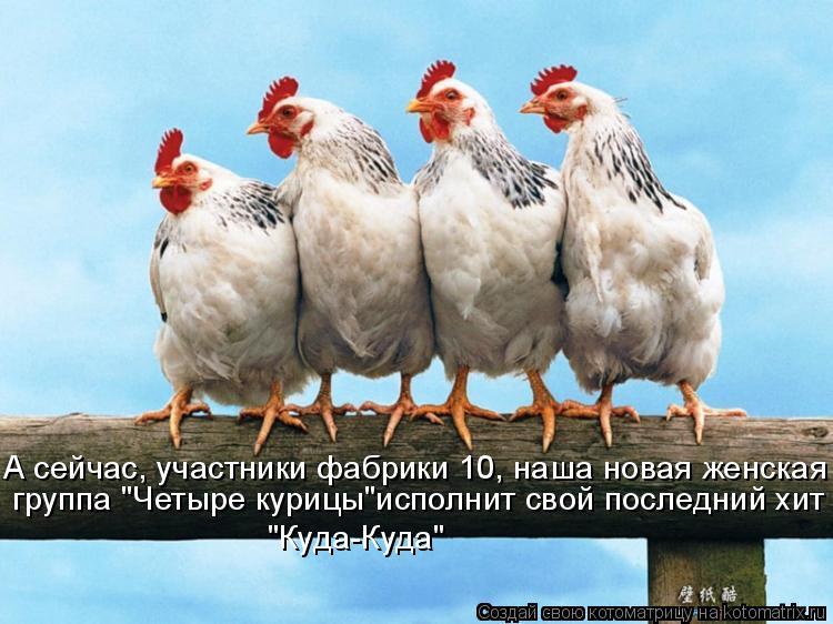 """Котоматрица: А сейчас, участники фабрики 10, наша новая женская   группа """"Четыре курицы""""исполнит свой последний хит  """"Куда-Куда"""""""
