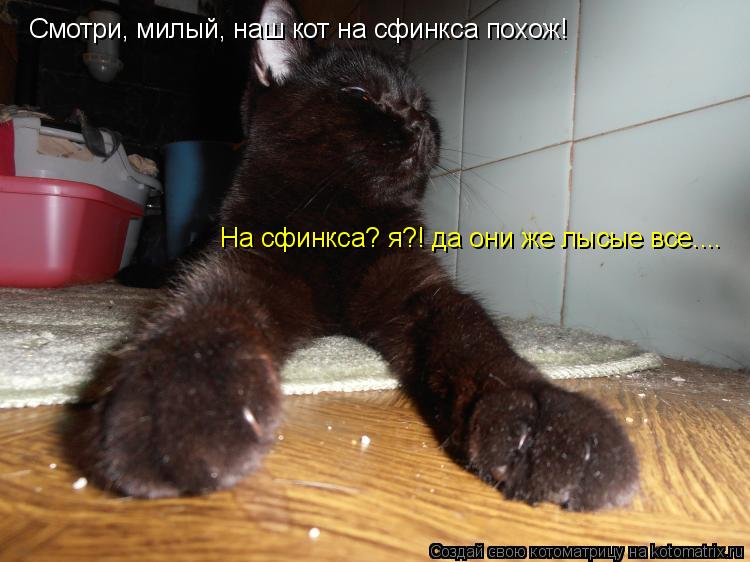 Котоматрица: Смотри, милый, наш кот на сфинкса похож! На сфинкса? я?! да они же лысые все....