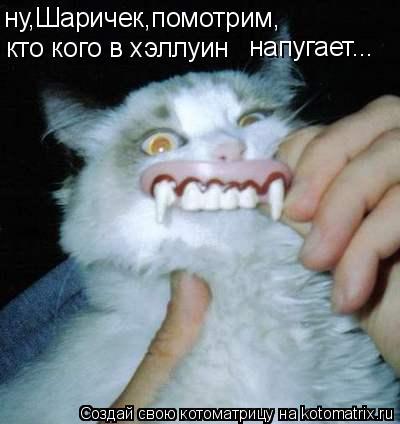 Котоматрица: ну,Шаричек,помотрим, кто кого в хэллуин напугает...