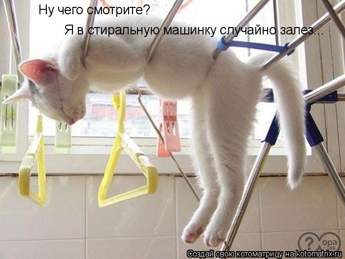 Котоматрица: Ну чего смотрите? Я в стиральную машинку случайно залез...